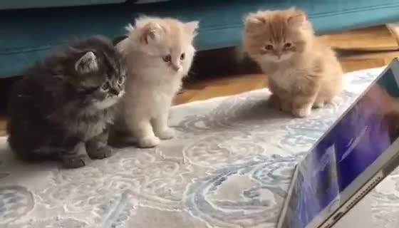 Cute Kittens Watching Cartoons. join list: CuteKitty (401 subs)Mention History.. join list: IFoundCuteMention History