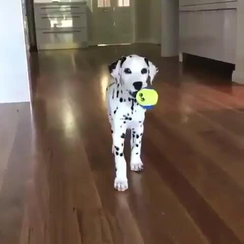 Thursday's Cute Stuff - 16/3/2017. join list: CuteStuff (2127 subs)Mention History Who's got cute dogs? We've got cute dogs. And we've got the cutest DOGS OF TH