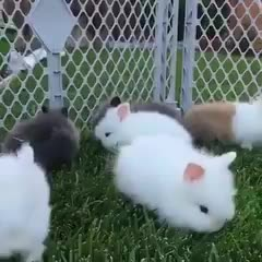 Thursday's Cute Things - 24/8/2017. join list: CuteStuff (2127 subs)Mention History They're illeagle... Bunnies and a cavy and a fox and a skin kitten and a poofy doggo... Brilliant comp!