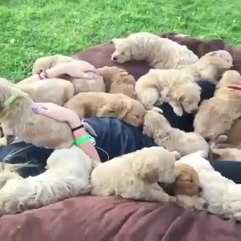 Thursday's Cute Things - 23/11/2017. join list: CuteStuff (2127 subs)Mention Clicks: 128798Msgs Sent: 579556Mention History I posted a raffle on my profile stat