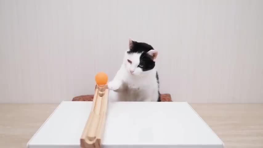 Cats and Ping Pong Trick Shots. .. Bruh that was awesome and cute