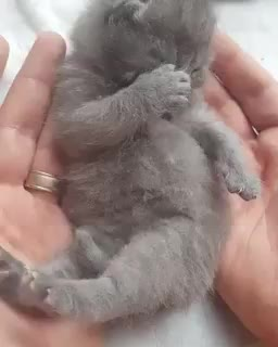 Thursday's Cute Things - 20/7/2017. join list: CuteStuff (2127 subs)Mention History Get yourself a watch that runs 2.7% slower and you'll be living on Mars Time