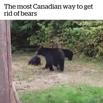 Hope you enjoyed my yard, have a good day. .. black bears seem so calm and , will they be the next animal that gets domesticated?