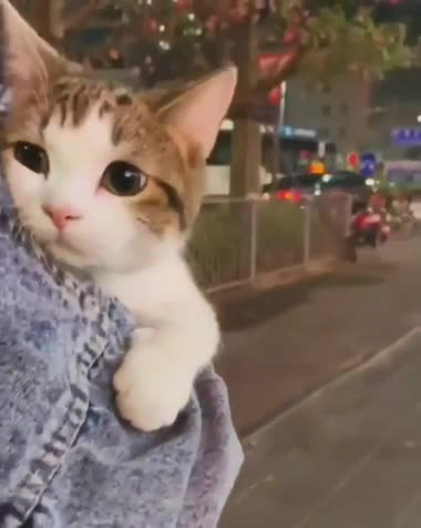 """this looks so comfy. join list: DoseOfCuteness (922 subs)Mention Clicks: 154720Msgs Sent: 2364441Mention History.. the music gives it a feel of """"had a long, tiresome and fun day out in the city but now it's time to go home and curl up in a blanket with some hot cocoa wh"""