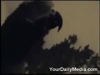abhorrent imperfect Crow. .