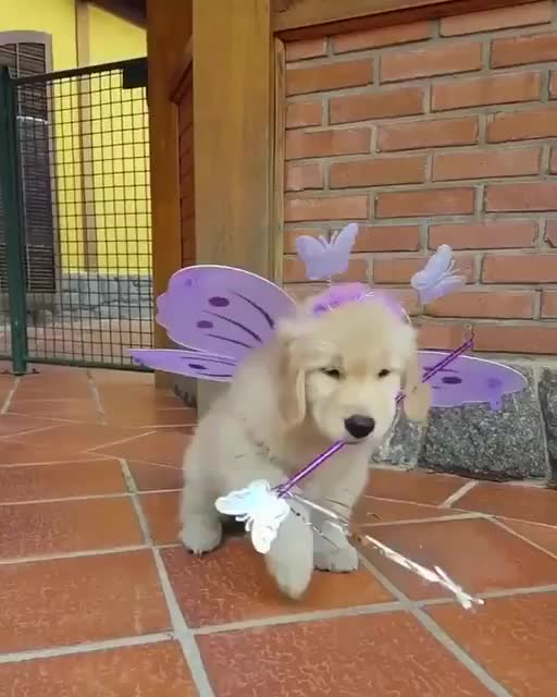 Thursday's Cute Things - 26/10/2017. join list: CuteStuff (2127 subs)Mention History I remember when it was only me posting on the /aww/ channel. Now I get 20 n