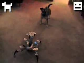Puppy Vs Robot. An epic fight...loved it.. What kind of dog is that?