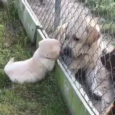 Thursday's Cute Things - 1/6/2017. join list: CuteStuff (2127 subs)Mention Clicks: 128798Msgs Sent: 579556Mention History.. Why there fence between doggo and pupper? Let them be together.