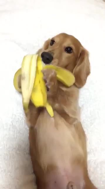 Thursday's Cute Things - 5/1/2017. join list: CuteStuff (2127 subs)Mention History Want to submit your cute pupper or kitten to be featured on these comps? Post