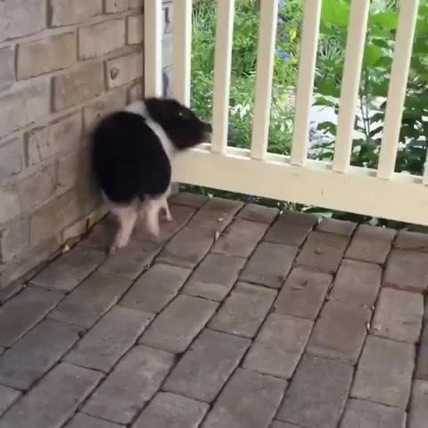 Thursday's Cute Things - 19/7/2018. CUTE MEME OF THE DAY join list: CuteStuff (2127 subs)Mention History BONUS CONTENT Go support your local animal video and st