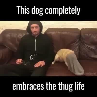 thug life. .. ... And there is no job...