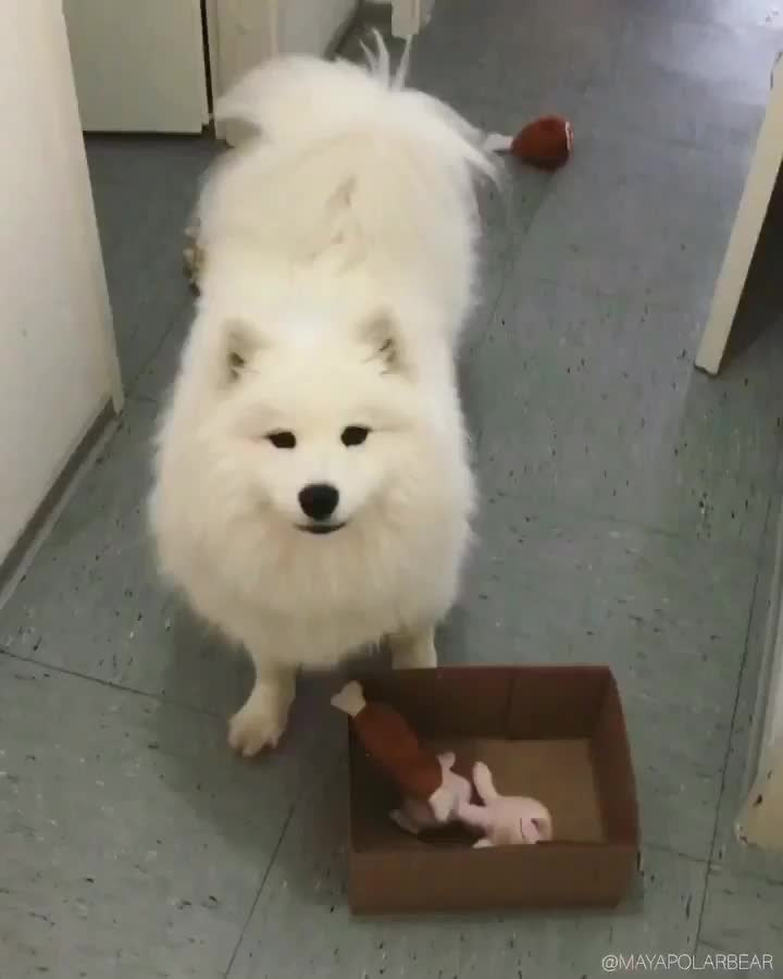 Thursday's Cute Things - 16/8/2018. CUTE MEME OF THE DAY join list: CuteStuff (2127 subs)Mention History wait this isn't google .. Holy the husky and the pig had my crying