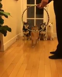 Thursday's Cute Things - 22/6/2017. join list: CuteStuff (2127 subs)Mention History I for one cannot wait for our new fluffy dog overlords... speaking of birthday puppies, Womble's puppy turns 1 this year