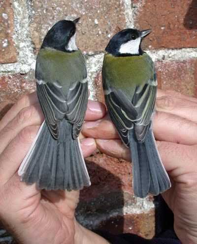 . So, I heard to get frontpage, you need a picture of two perfect tits?.. finally something funny !!!