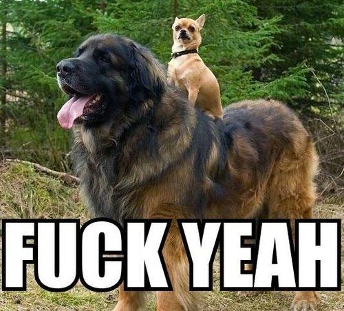Yea Dog. .