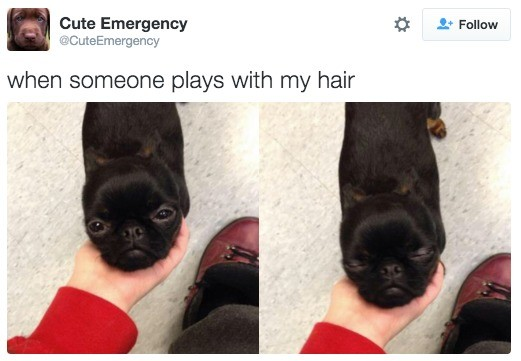 0. . lute Emergency at As Fellow when demesne plays with my hair. looks like a chug