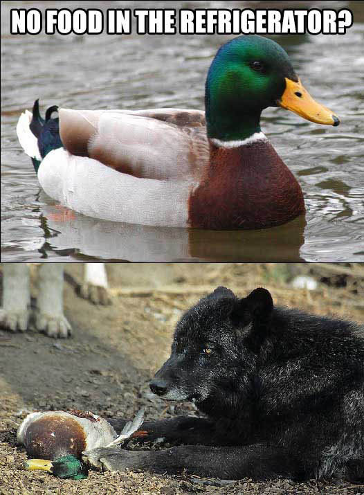 Actual Advice Mallard. OC Insanity Wolf approves this. ERIE