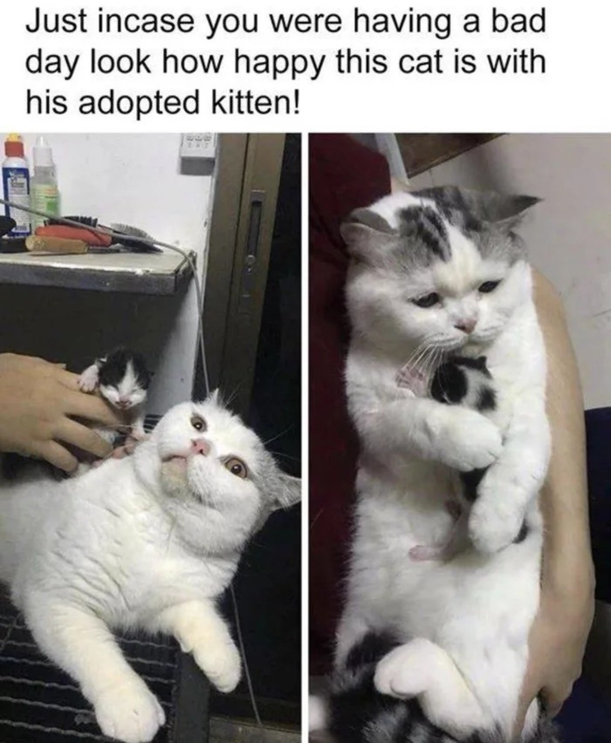 """Adopted kitty. .. Went from """"what the is that?"""" To """"I'll love you forever"""""""