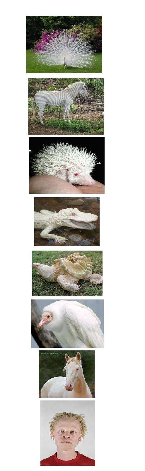 albino fun. pretty crazy stuff, must of us don't get to see like this because albino animals only live a short life<br /> (btw last pic is a black albino.