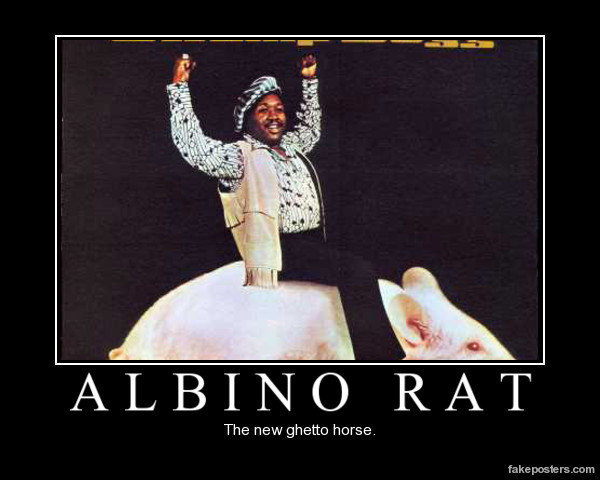 Albino rat. .. Aw rats are really good pets.... I don't see how it is a ghetto horse but ok