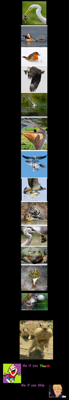 Amnamals Comp Pt 2 Animals Eatin Animals. Pt. 1 pictures/3020015/Amnamals+Comp/ Pt 3. pictures/3024461/Amnumals+Pt+3.