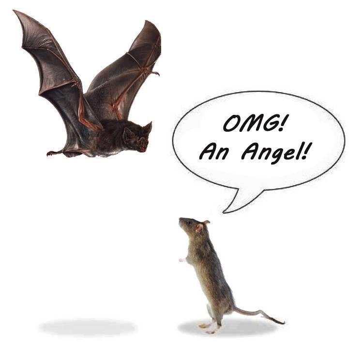 An Angel. .. Bat in Norwegian is flaggerMUS. Mus is mouse in norwegian