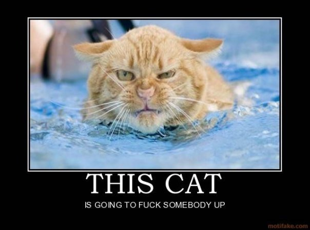 """Angry Cat. . IS GOING TO . JCA"""" 1 'gimili! UP. It's staring into my soul... Help..."""