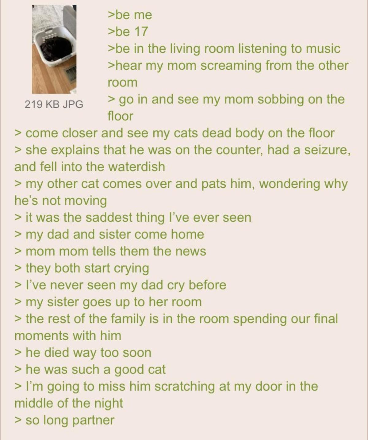 Anon loses his Cat. .. Godspeed, little one