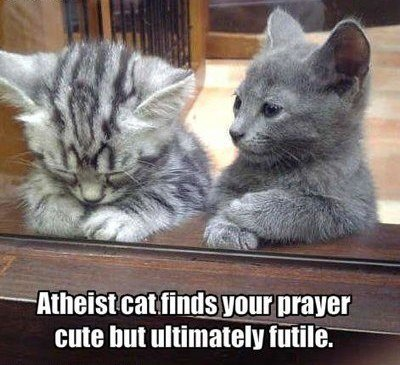 atheist cat. . waver we nut ultimately Miler' - -- ---. Comment #2: Atheist cat is a prick +2 Comment #4: atheist cat is a snobby prick. -2 Conclusion: Funny junk does not like the word snobby.