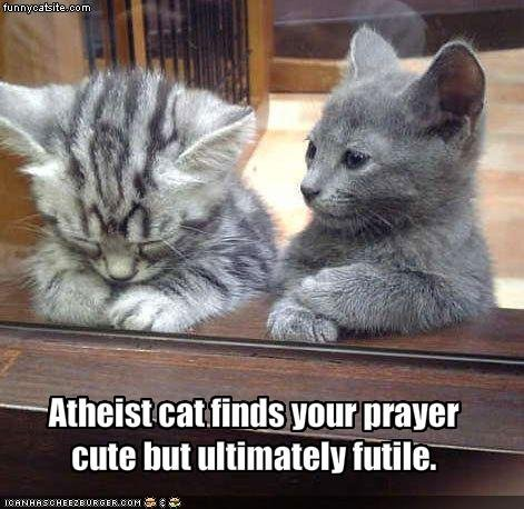 Atheist kitten. i thought it was funny. tell me if repost. and creds are there. hads Hum prayer we but ultimately -