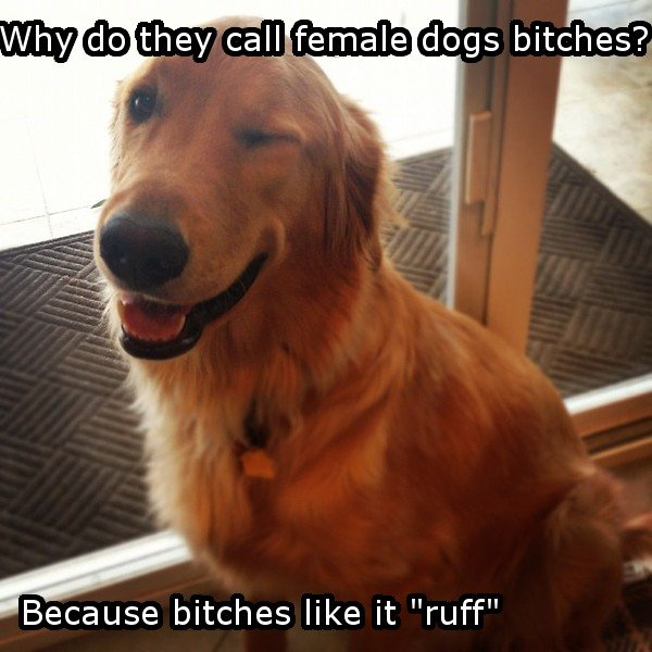 "Bad joke is bad.. I don't know what to write here.. itches like it ""ruff"""