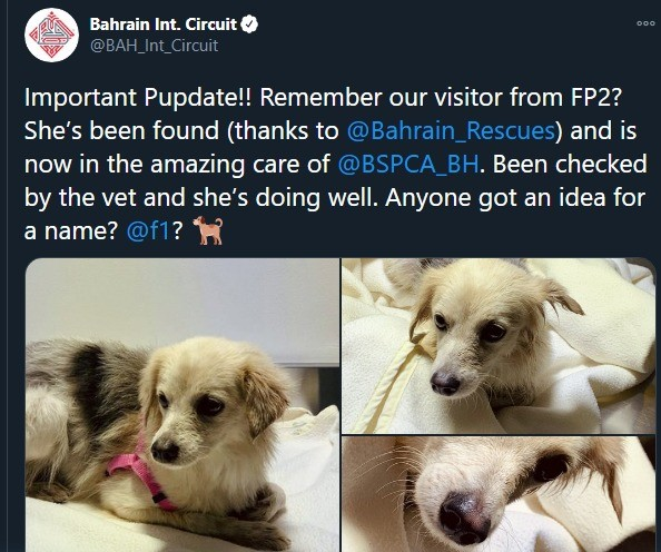 Bahrain Pupper. IntCircuit/status/1332625667071029249 join list: Motorsports (185 subs)Mention History.. Pastor.