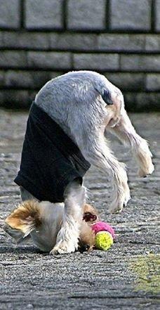 ball yoga!. .