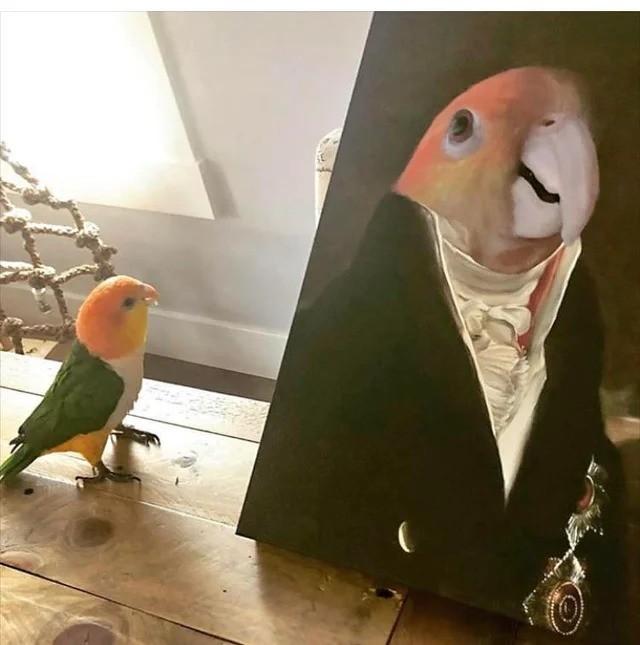 bird up. .