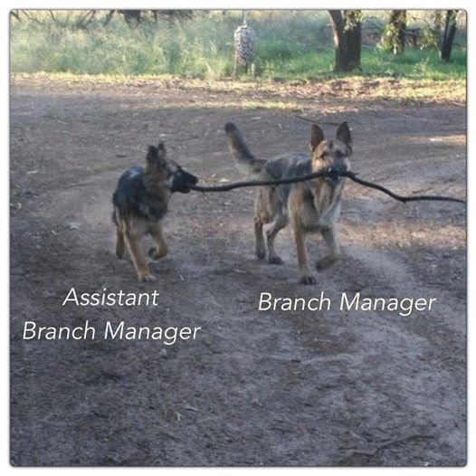 Branch manager. . Assistant Branch Manager Branch Manager