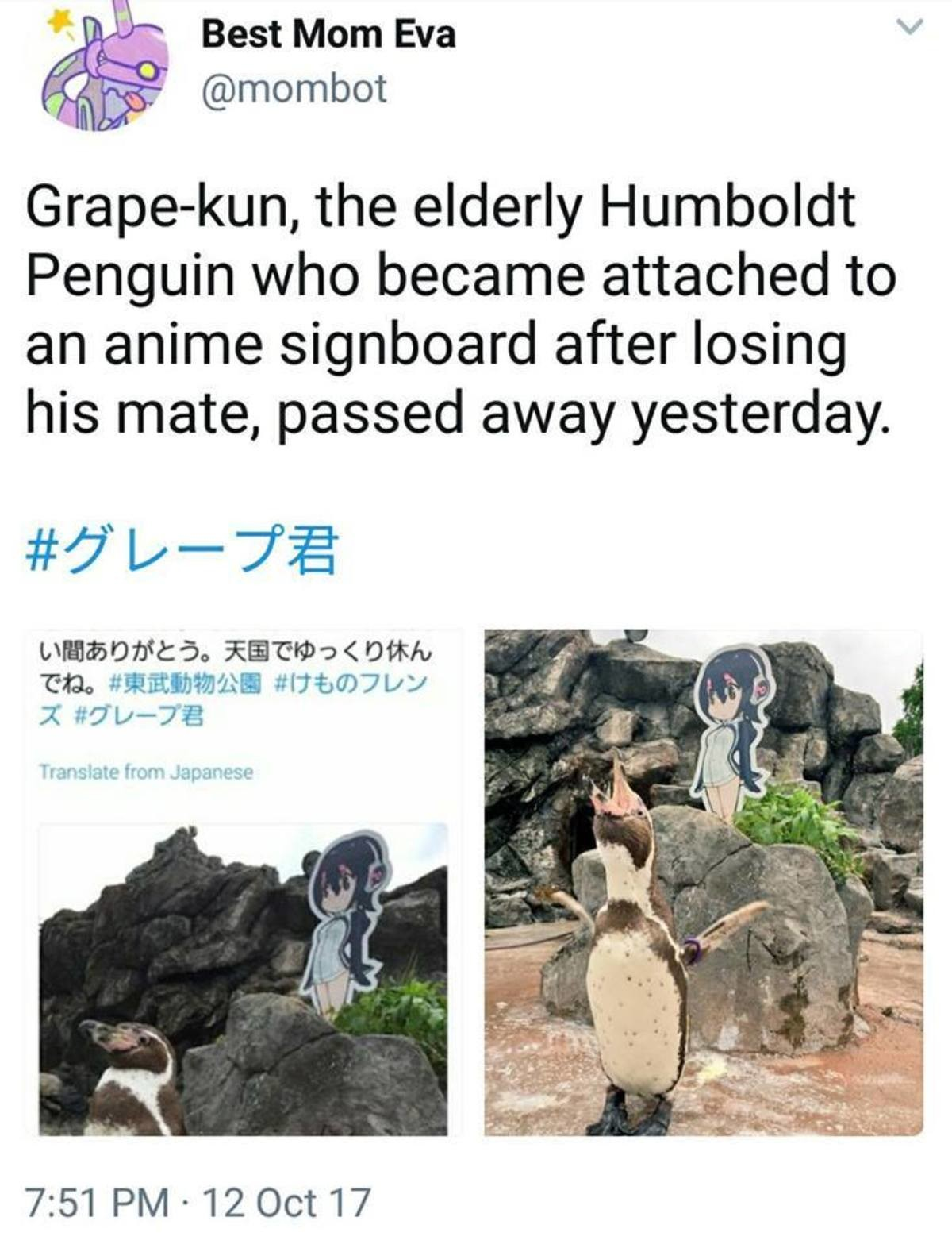 Breaking News: Grape Kun Has Officially Died. as if the world couldnt be crueler on Oct 12 2017 Grape jun the waifu penguin has died he was pretty old as is but