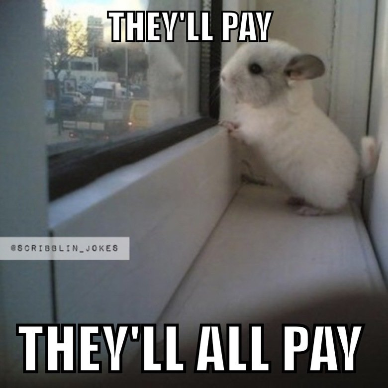 bunny redemption. . ll PM THEV' ll All PM. thats a chinchilla