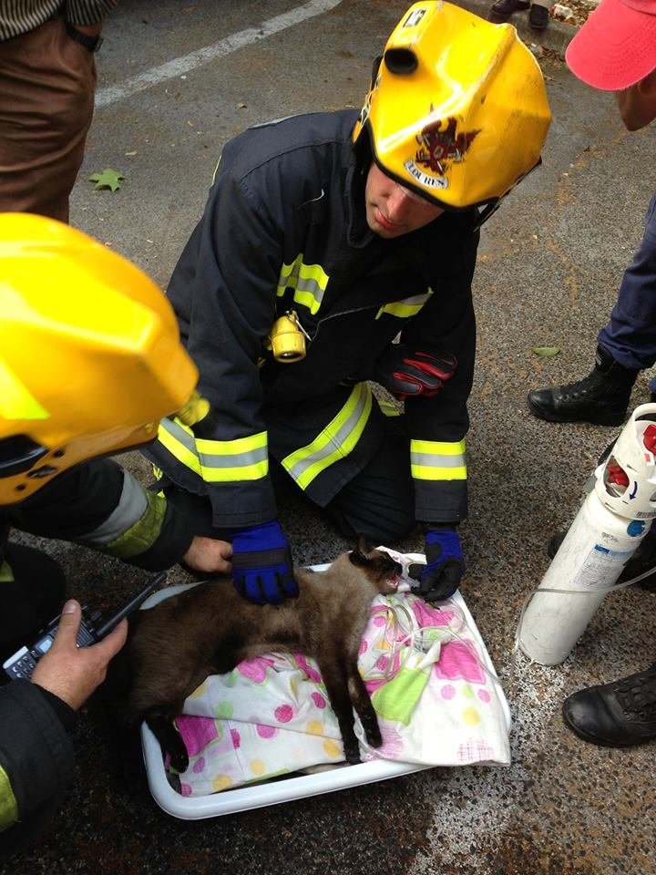 cat, humanity. Firefighters save a cat from a housefire. He was CPRed and then given oxigen. He now is with his human family... My cat of 5 years just died, and it looked just like that when she passed away. I was having fun until I saw that picture.