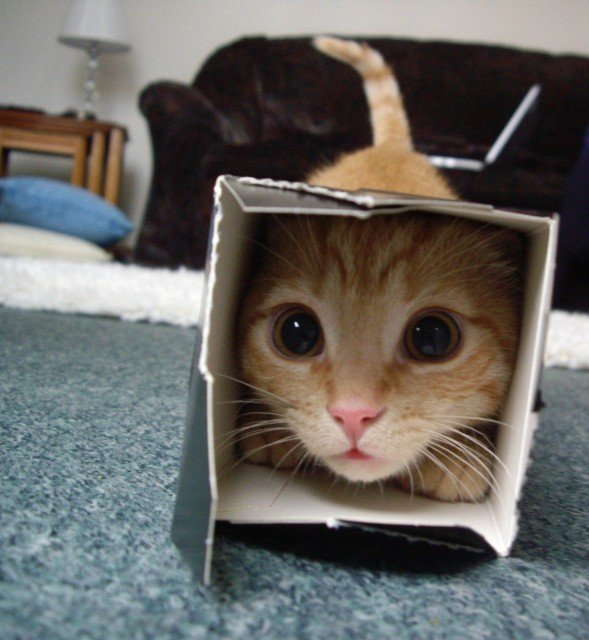 Cat. Source: dumpaday.