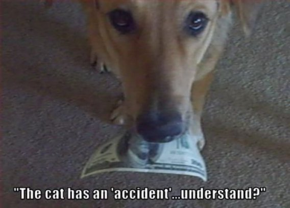 """cat has an accident. . The cathes an 'accident'.,, """""""