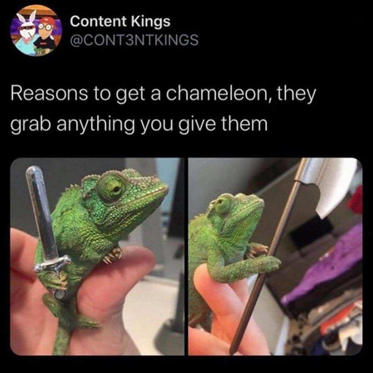 Chameleon Hidden in Frame. ..