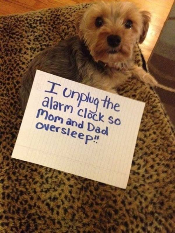clever pup!. .