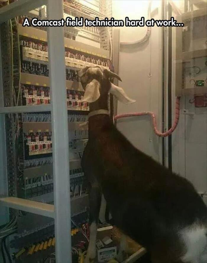 Comcast. dumpaday.. This is a terrible metaphor. The goat is actually trying here.