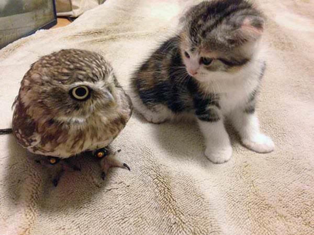Cuddles. join list: CuteKitty (401 subs)Mention History join list:. I freaking love adorable owls. Anyone have any more they can share?