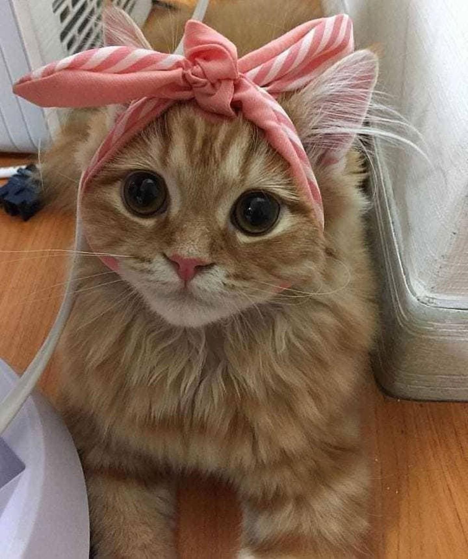 Cute Kitty. .. Cyot? More like Cyoot.