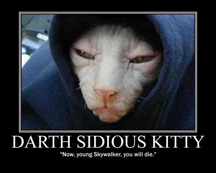 Darth Sidious Kitty. Picture, hilarious. Text, you decide. Thumbs up if you like it... lol tish kitty so cute)