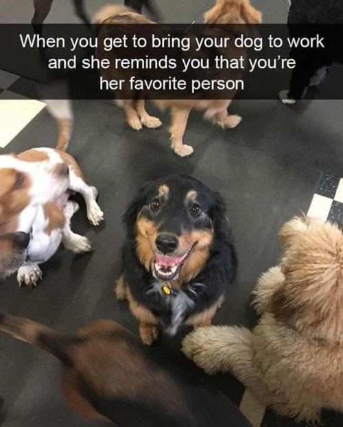 Dawg. join list: HappyThoughts (1573 subs)Mention History..  A dog's love for its friend is just about as wholesome as it gets