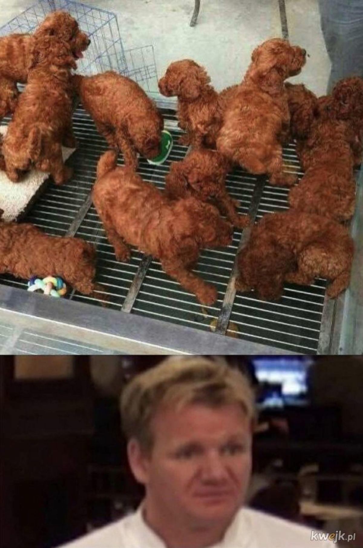 Deep Fried Puppies. .