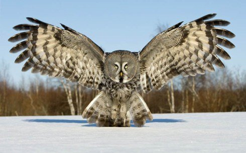Desc Help ME!!!!. Lot of backstory, but if somebody could format the owls wings to be a pictogram thingy with words that say Stay Kind. Have Stay be the left wi