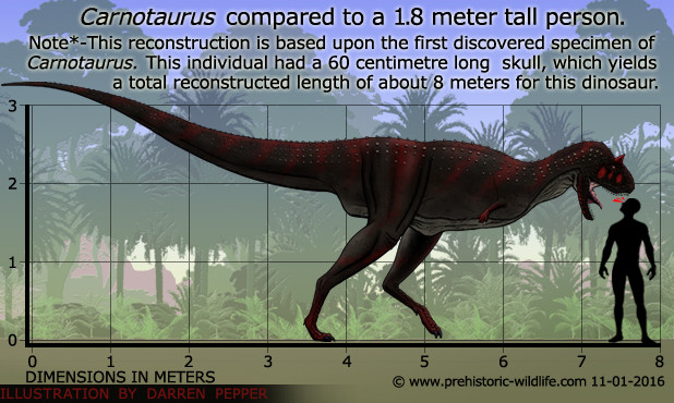 dinosaurs. join list: prehistoricCreatures (357 subs)Mention History . Carnotaurus compared to a 1. 8 meter tall person.